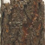 scultura di corteccia illuminata