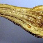 scultura in legno uccello
