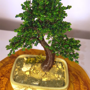 bonsai di perline in vaso