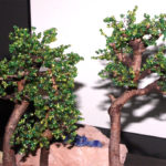 bosco bonsai su losa