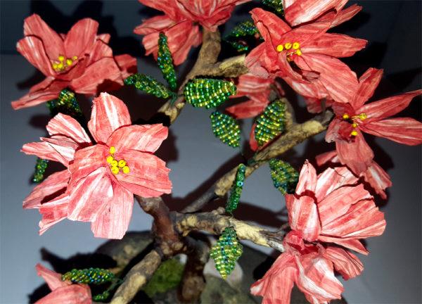 fiori di melograno bonsai