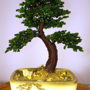 ginepro bonsai in vaso decorato