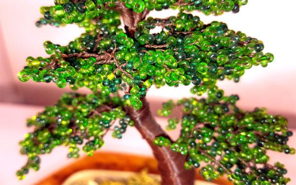 ginepro in vaso bonsai con perline