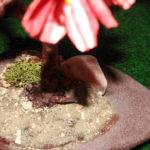melograno bonsai su losa