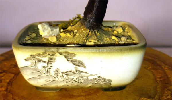 vaso bonsai decorato a mano