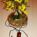 Mimosa e collana (e)
