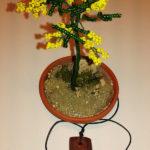 Mimosa e collana (f)