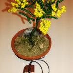 Mimosa e collana (i)