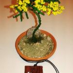 Mimosa e collana (j)