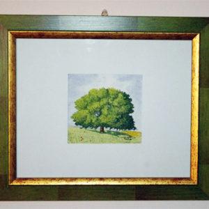 albero secolare_c